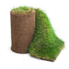 Gräs på rulle